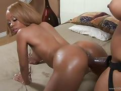 Oiled lesbians with black butts drilling their pussies using strap-on